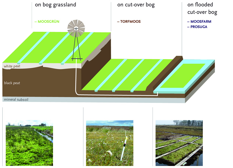 Pattern of degraded raised bog areas; potential Sphagnum farming